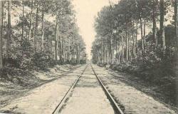 Voie ferrée qui transperce la forêt de pins